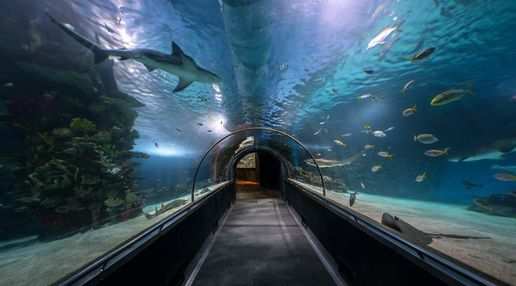 Cheshire's Blue Planet Aquarium tunnel, showing a shark swimming overhead and various tropical fish. To the left of the tunnel is a reef. The entire tunnel is bathed in a  blue light from the water.