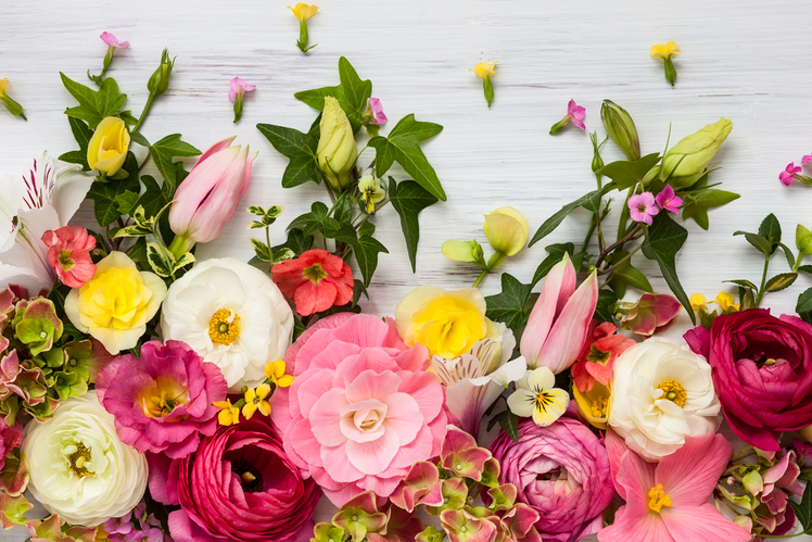 Spring flowers arranged against a painted white board.